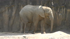 Young Elephant Stock Footage