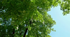 Sun On Blue Sky Visible Through Green Forest Trees - stock footage