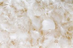 Light fluffy white feather background texture - stock photo