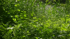 Fresh Green Grass in Forest Park Branches Fresh Bright Green Trees Are Swaying Stock Footage