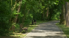 Male Backpacker is Riding Away by Bicycle in Park Alley Bench Under Trees - stock footage