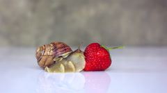 snail creeping on strawberries - stock footage