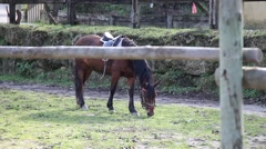 Horse eating grass in the stables, slider shot Stock Footage