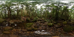 360VR Beautiful tranquil natural environment of rain forest VR Stock Footage