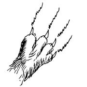 cat claw doodle hand drawn - stock illustration