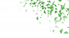 Whirling Green Leaf - White background - stock footage