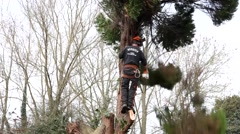 tree surgeon chopping down tree with chain saw - stock footage