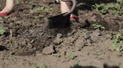 Cleaning the weed in a potato field Stock Footage