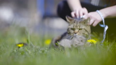 Cat getting rid of its winter hair outside 4K Stock Footage