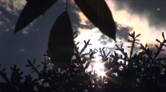 Pollen flying during summer 01 Stock Footage