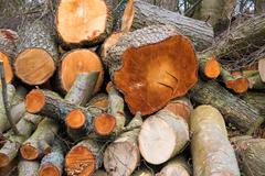 Stockpile of Logs - stock photo