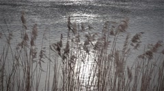 Dry reed in the sunlight against river slow motion Stock Footage
