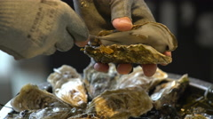 Chef opens fresh oysters for customers in the restaurant. Close Up. - stock footage