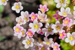 Background of pink flowers - stock photo