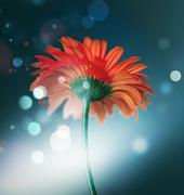 bokeh background with red flower - stock illustration