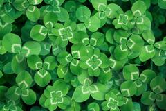 clover leaves full screen - stock illustration
