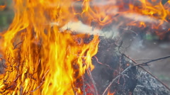 The fire burning dry branches Stock Footage