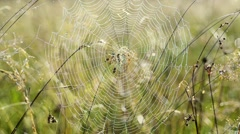 Spider web with dew - stock footage