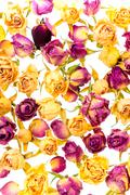 Beautiful dried yellow and pink roses like as background is isolated on white Stock Photos