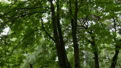 4K Lush Deciduous Forest with Chestnut Acacia and Pine Trees 1 - stock footage