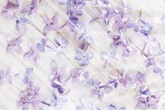 Beautiful spring background, small petals of lilac flowers macro photo - stock photo