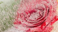 Abstraction with red rose Stock Photos