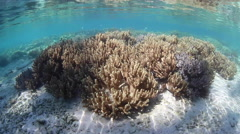 Corals and Remote, Tropical Island - stock footage