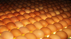 Poultry. Yellow chicken eggs on the conveyor. - stock footage