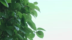 Shot of lush spring garden foliage in a gently blowing morning breeze - stock footage