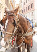 Horse carriage in Rome Stock Photos
