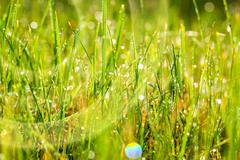 Wet green grass in dew drops Stock Photos