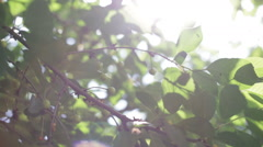 The glare of the sun in the leaves - stock footage