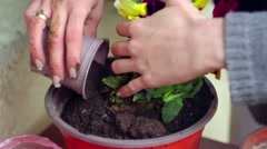 Woman planting flowers on a balcony - stock footage
