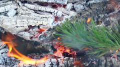 Pine branch burn in campfire. Closeup. Branch of evergreen tree burns in fire Arkistovideo