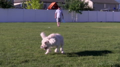 Throwing Ball for Dog Stock Footage