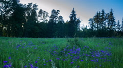 4k timelapse of sunset over meadow with blooming bluebells flowers - stock footage