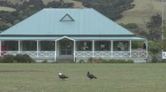 Birds Walking along empty Football Field Stock Footage