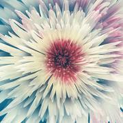 Beautiful white flower Stock Illustration