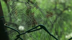 Spiderweb and green grass 02 Stock Footage