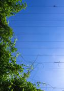 Climbing plants on cables Stock Photos