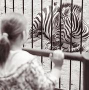 Girl near a cage with zebra in zoo - stock photo