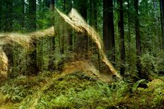 Double exposure of a coyote and forest Kuvituskuvat
