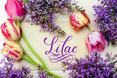 Beautiful frame of lilacs and tulips for greeting card with word lilac - stock photo