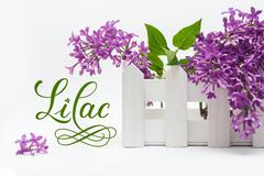Beautiful bouquet of flowers, small fence on the white background and word lilac - stock photo