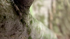 Tilt up over tree branch and into the sun - stock footage
