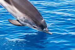 dolphin detail of fin jumping outside the sea - stock photo