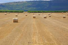 Agricultural field with bales - stock photo