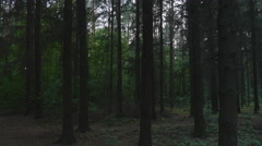 Polish landscape. Forest at dusk Stock Footage