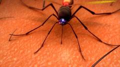 Mosquito bite Stock Footage