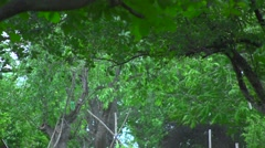 Trees Before The Storm 01 - stock footage